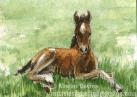 Chestnut Foal ACEO by Pannya
