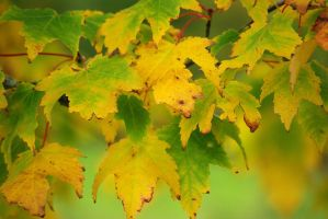 Autumn colours 2--2012:) by cheah77