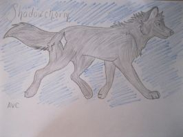 OC: Shadow-Charm the Wolf by animeVampire-cat