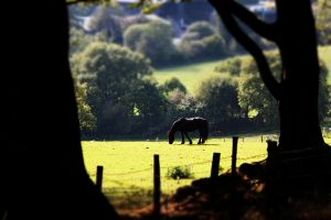 Indian Summer by GregFisher