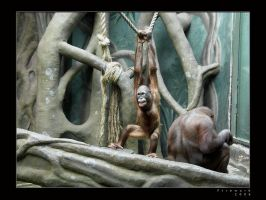Life in Zoo 30 by firework