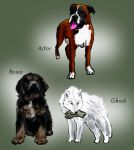 Puppies by guad