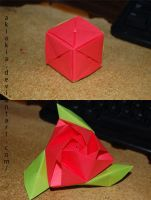 Magic rose cube by Akiakia