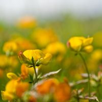 Tiny by eyedesign
