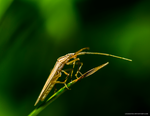 Insect Macro by chamathe