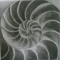 Seashell Observation Drawing (2) by SkyChow