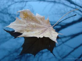 Maple Leaf by sillverrfoxx
