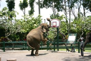 elephant playing basketball by fa-stock