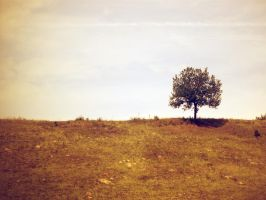 Lonely Tree 12 by Iulia-Oprinesc