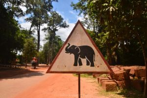 Yield to Elephants by drewhoshkiw