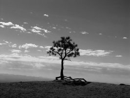 Lone Pine Bryce Canyon Utah by CorazondeDios