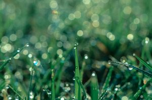 morning dew by jetsetaphrodite