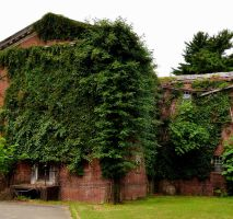 Ivy Covered Abandoned Asylum by PAlisauskas