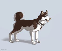 Husky dog by FlashW