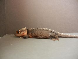 Red Eyed Crocodile Skink 8 by FearBeforeValor