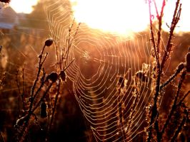 Spider web by DorottyaS