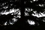 Positive and Negative Space - Pine Tree by ImzadAmyMoon