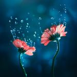 Reverie by arefin03