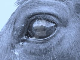 Tears of A thoroughbred by Passion-For-Pictures