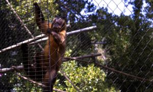 Life In a Cage by DylanStricker