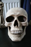 Skull 1 by TwiggXstock