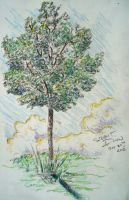 Tree Study #1 - In the Summer Breeze by Dunn95
