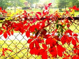 Fence1 by cornflakes33