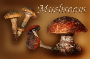 Mushroom.. by moonchild-lj-stock
