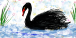 black swan by MoishPain
