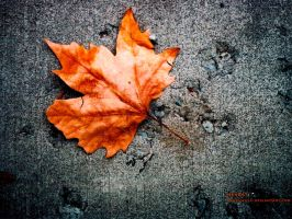 Herbst by Athelwulf