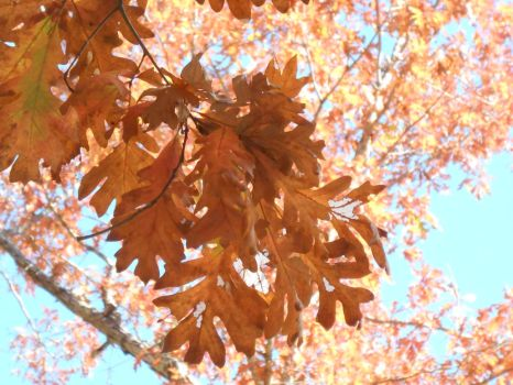 Autumn-Related Photographs New England 2016 Part 2 by SteelDollS