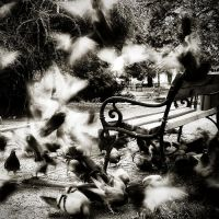 pigeons by BelcyrPiotr