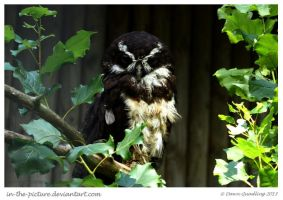 Goggles the Groovy Spectacled Owl by In-the-picture