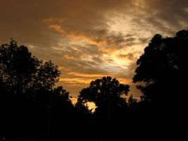 Sunset behind trees by Keith-D