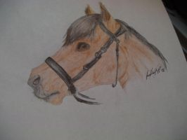 Pony Handdrawed by Moqie