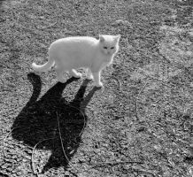 black cat white cat by donfoto