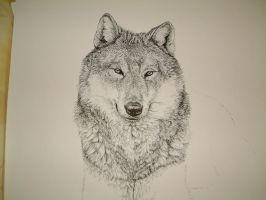 wolf by lindseydearnley
