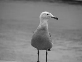 Spirit of the Seagull -B+W- by TheFastFiduciary