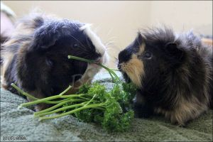 Parsley For Two by Bafa