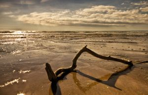 Gower by CharmingPhotography