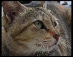 Cat by mercurialled