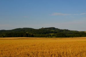 Fields of Moravia by Jaldithas