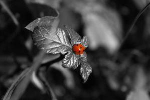 Ladybird by PaulCastleton