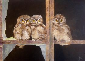 Owls in the window by WendyMitchell