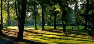 sunlight stripes in the park2 by Wielgos