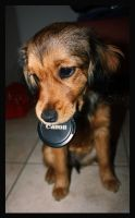 Even dogs love Canon by Lenua