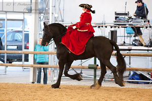 Sidesaddle Friesian_11 by CalyHoney