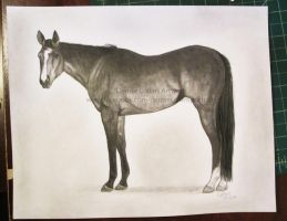 Bay Thoroughbred Mare by FlyingFancy1