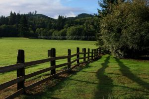 Both Sides of the Fence I by LoneWolfPhotography