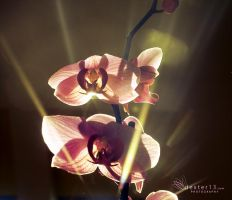Life rays by dexter13-sk